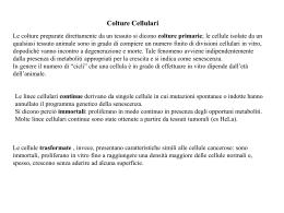Colture Cellulari - Università degli Studi di Roma Tor Vergata