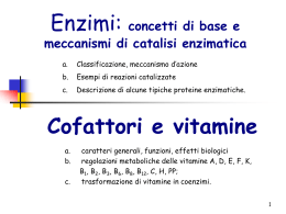 Oloenzima= apoenzima+coenzima