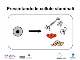 Presentazione PowerPoint con note