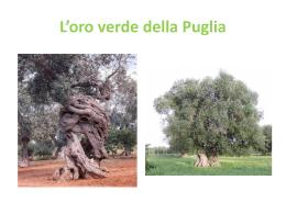 Mostra produzione olio d`oliva - comunicazione ambientale e