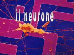 08 - Il neurone