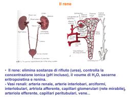 05Fisiologia-parte quinta