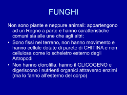 I Funghi - itozieri.gov.it