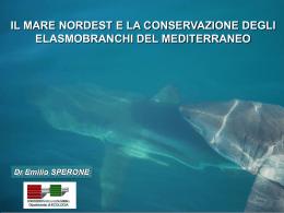 La presentazione - Mare Nordest Trieste