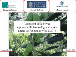 """Slides """"Bioecologia della mosca delle olive"""""""