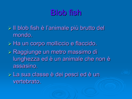 Blob fish nicla francy ale