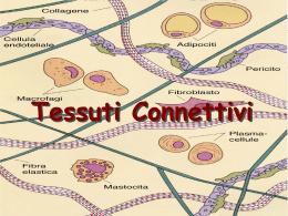 013_Tessuti_Connettivi
