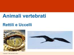 rettili e uccelli