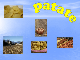 patate - Alberghierobrindisi.it