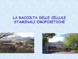 Ematologia Pesaro