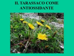 la relazione di Alberto Allegretti a Carpegna