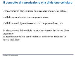 Il ciclo cellulare e la mitosi