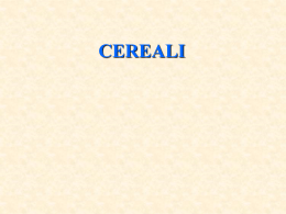 8 cereali - I blog di Unica