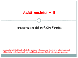 Acidi nucleici – 8