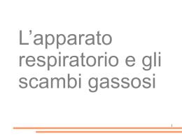 apparato_respiratorio