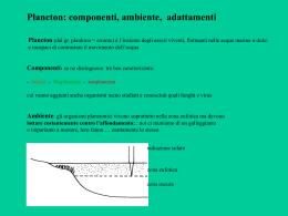 Presentazione plancton