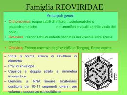 Reoviridae - Sezione Bulldog di Fossombrone