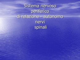 nervispinali
