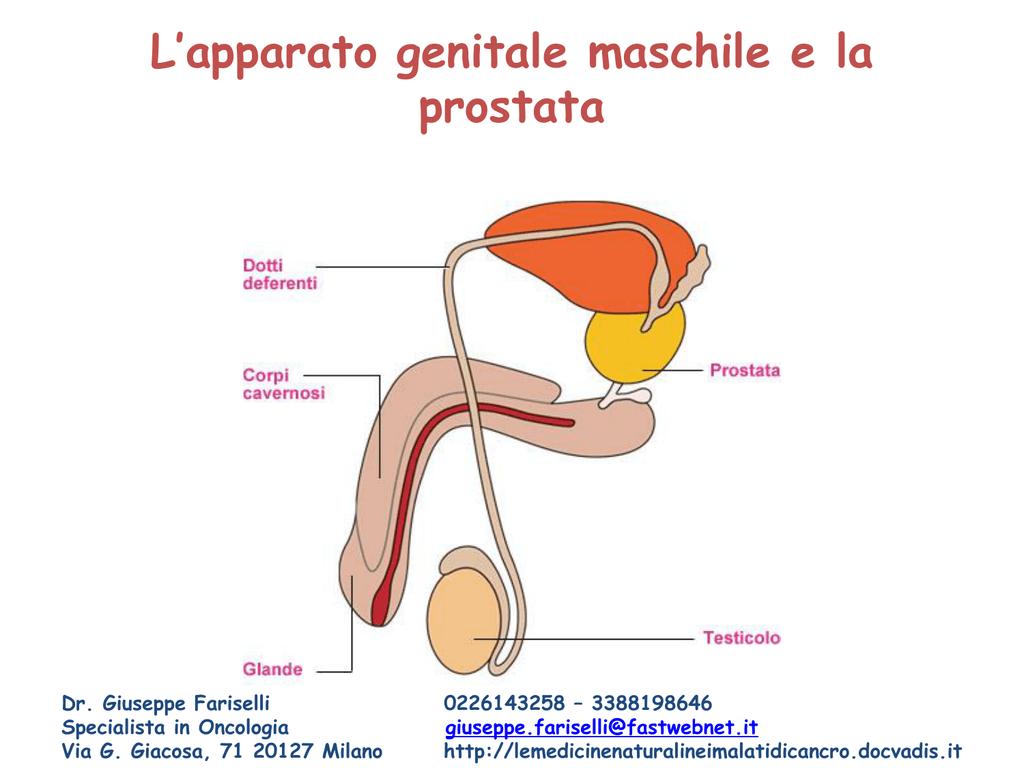 glande corona prostata sintomi