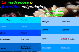 Madrepora3