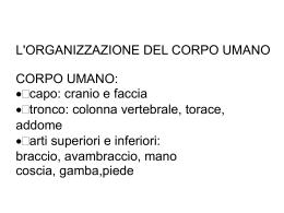 organizzazione corpo umano