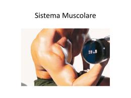 Sistema Muscolare – powerpoint