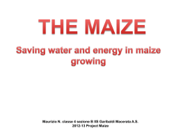 Maize & saving resources