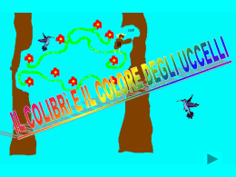 Il colibrì e i colori degli uccelli