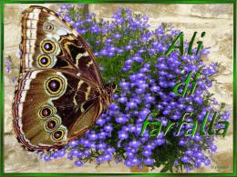 Ali di farfalle - Lo scrigno dei tesori