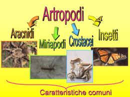 Diapositiva 1 - Cappelletti