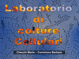 Checchi Marta – Commisso Barbara Laboratorio di colture Cellulari