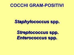COCCHI GRAM-POSITIVI Staphylococcus spp. Streptococcus spp