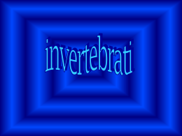 Invertebrati e vertebrati