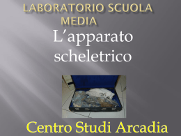 L`apparato scheletrico Laboratorio seconda media