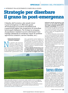 Strategie per diserbare il grano in post-emergenza