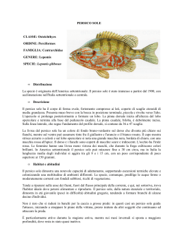 PERSICO SOLE CLASSE: Osteichthyes ORDINE: Perciformes
